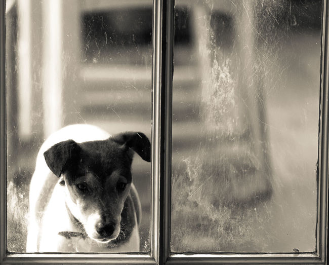 Contemplation Dog At Windo Dogs Refelection Dogslife First Eyeem Photo