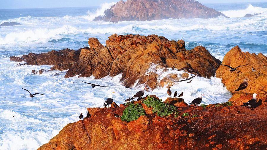 Birds Perching On Rocks At Sea Shore