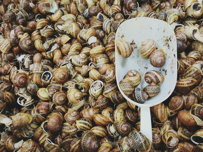 Snails for sale... yuk 😨 Food No People Snails Indoors  Market Stall Ingredients Large Group Of Objects Beautifully Organized Backgrounds