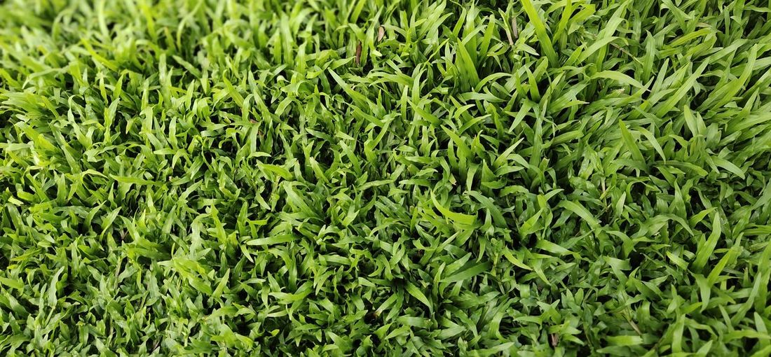 Lawn in the