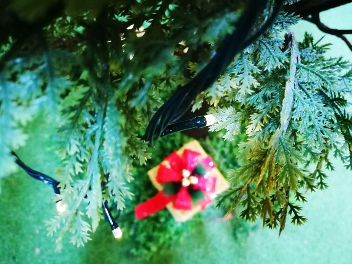 No People Nature Beauty In Nature Flower Plant Growth Fragility Day Animals In The Wild Close-up Water Outdoors Animal Themes Tree Bird Freshness The Week Of Eyeem Christmas Gift Red