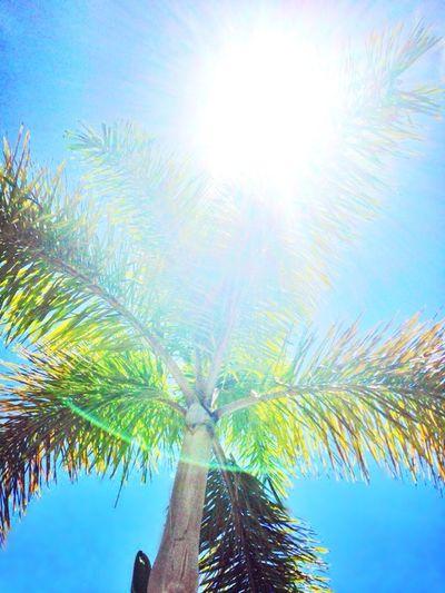 Sunshine Exposure Palm Trees Nature Summer Florida Naples United States
