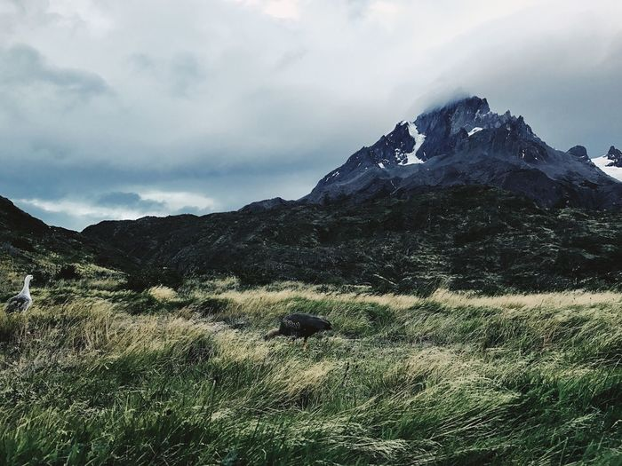 Landscape Mountain TorresDelPaine Chile IPhoneography