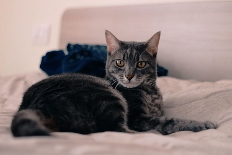 Cat EyeEmNewHere EyeEm Selects Pets Domestic Animals Domestic Domestic Cat Cat Furniture Animal Themes Animal Feline Relaxation Bed Indoors  One Animal Lying Down Home Interior Domestic Room Bedroom EyeEmNewHere