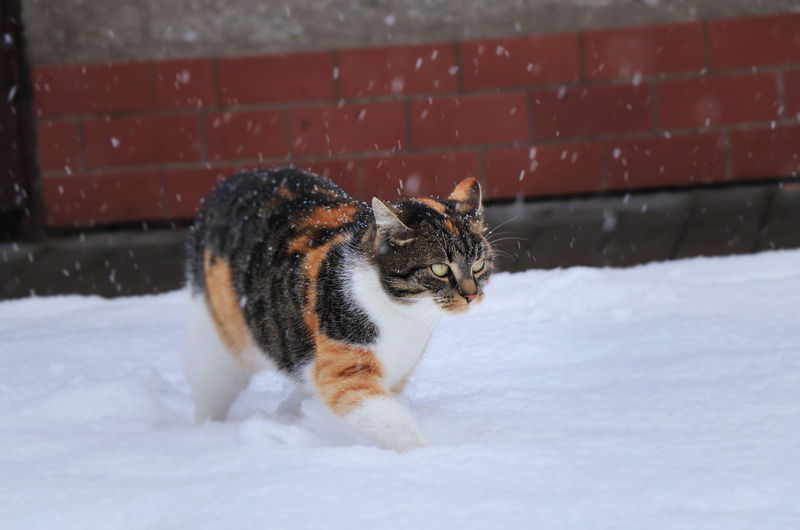 View of a cat on snow