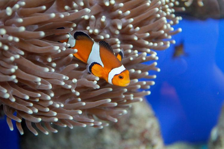 Nemo fishs in