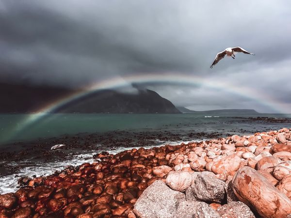 Hout Bay Spectacular Rock Rainbow Animal Themes Bird Animal Animals In The Wild Water Vertebrate Animal Wildlife Flying Sea Sky Beauty In Nature No People Nature Horizon Over Water