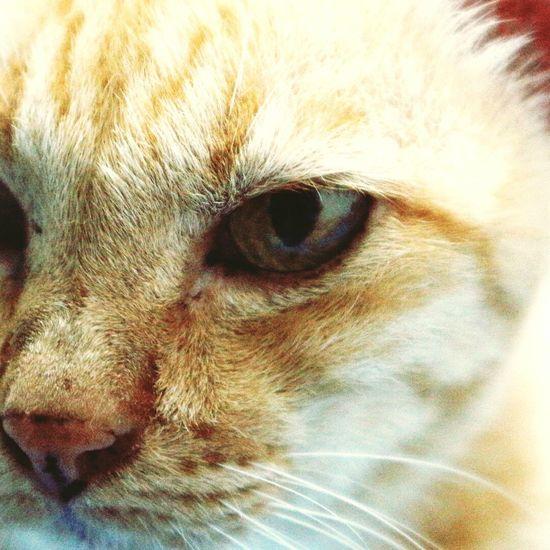 One Animal Close-up Animal Eye