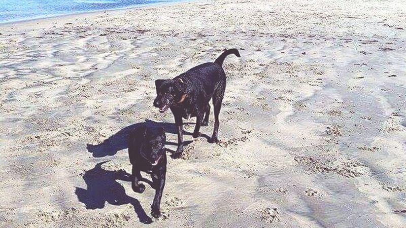 Summer Dogs First Eyeem Photo