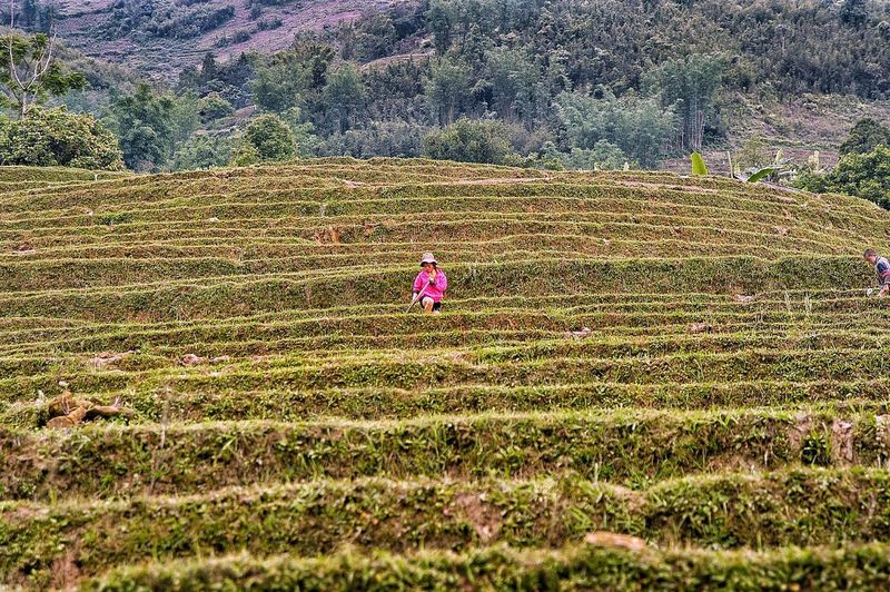 Vietnam SaPa Discovery Popular Photos Popular Reflection EyeEm Selects Plant Land Field Nature Day Growth Landscape Rural Scene Flowering Plant Beauty In Nature Flower Agriculture Sunlight Environment Grass No People Outdoors Freshness Farm Tranquility