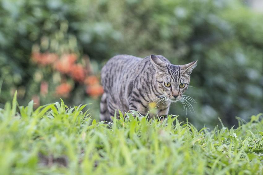 ねこMichael Yamanashi,japan EyeEm Cat 山梨県 Pet Portraits The Week On EyeEm EyeEmNewHere