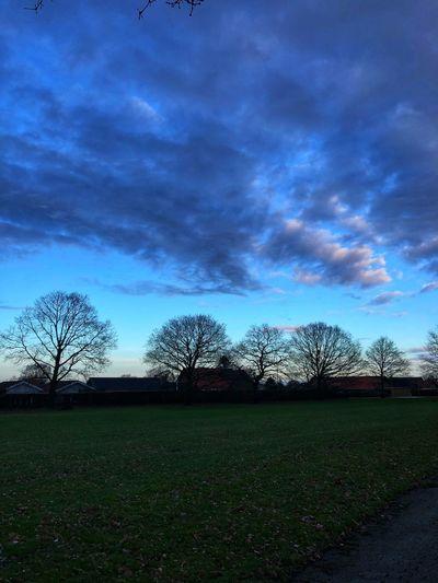 Skyscape Skyscapes Sky_collection Cloudscape Beautiful Sky❤ Bluesky Decembersky Cold Day Sky Cloud - Sky Tree Nature No People