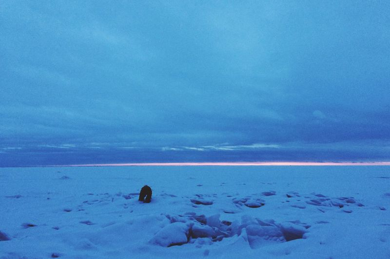 Beach Beauty In Nature Cold Temperature Day Frozen Horizon Over Water Ice Mammal Nature No People Outdoors Scenics Sea Sky Snow Tranquil Scene Tranquility Water Winter