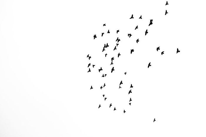 negative space Abstract Nature Bird Flying Colony Togetherness Flock Of Birds Silhouette Animal Themes Sky Formation Flying Animal Migration Spread Wings Migrating