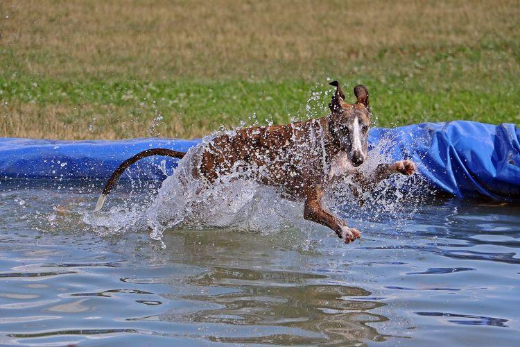 Full length of man splashing water