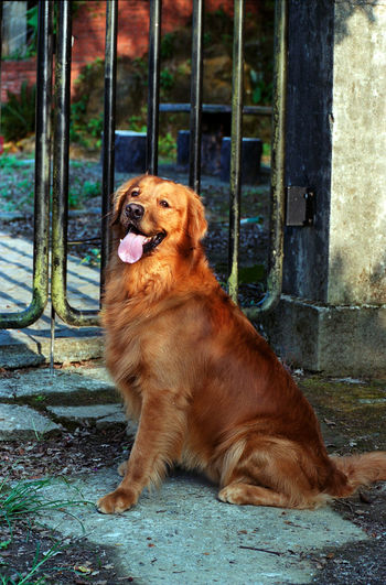 Animal Dog Pets