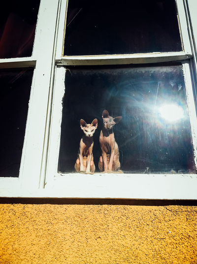 Two sphynx cats enjoying the view Animal Animal Head  Animal Themes Cats Creepy Curious Curious Cat Day Domestic Animals Feline Funny Hairless Cat Mammal Nature No People Observing Pets Sky Sphynx Cat Spooky Sunlight Sunlight Reflection Watching Window Window Sill