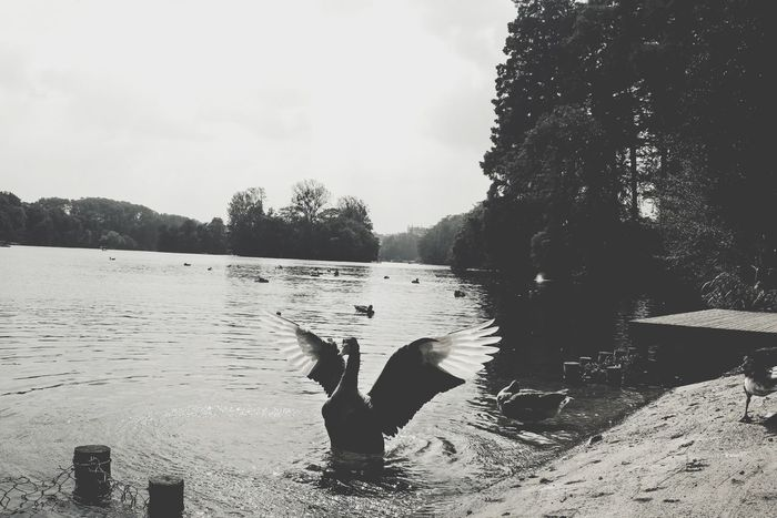 What Does Freedom Mean To You? Blackandwhite Cygne EyeEm Nature Lover