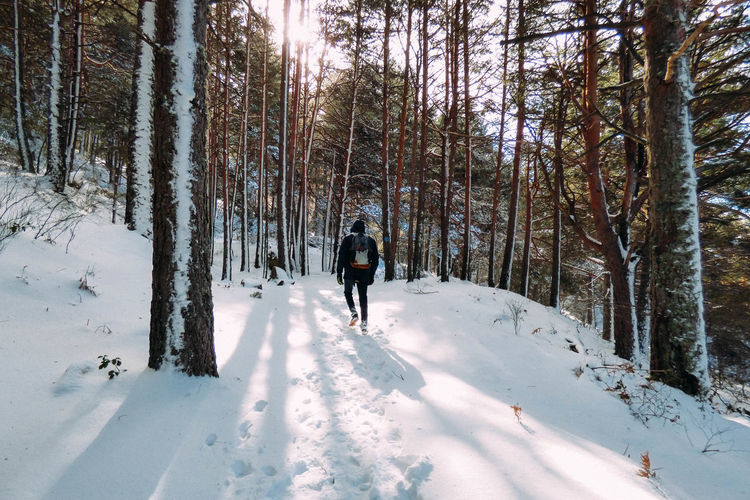 Man skiing in snow covered forest