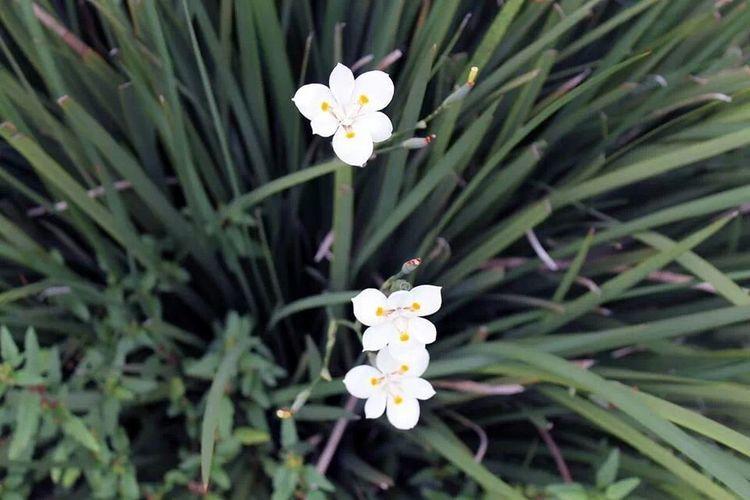 Flowers White Outside