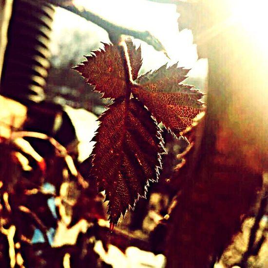 Leaf Nature Yeşilyurt Yapraklar🍂 Bahce Photo Sunlight