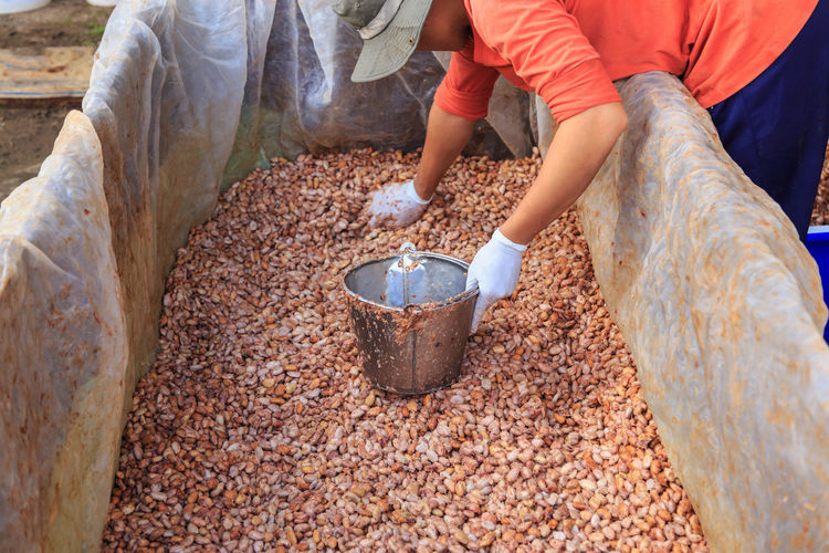 High angle view of man filling bucket with cacao seeds