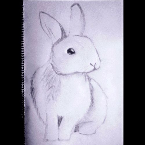 I really hope you like this bunny sketch 💗 Bunny  Sketch Drawing Beautiful Art Pencil Draw Instagood Animal Animalsketch Milestone 100followers 😚 😚 ✏ 😚 ✒ 😚