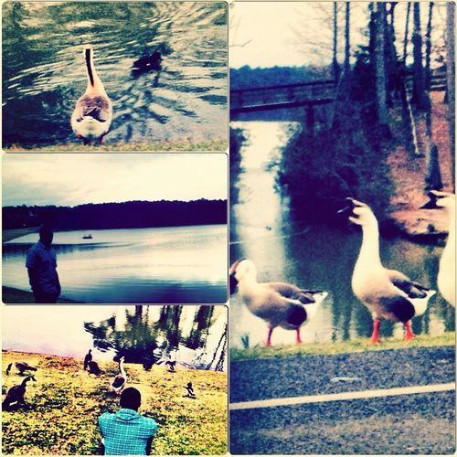 Lake Veiw