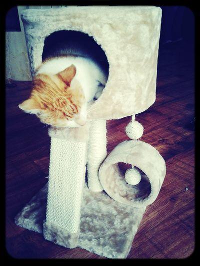 Cat New Toy
