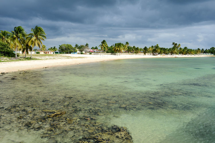 Bay Of Pigs Cuba Beach Beauty In Nature Cloud - Sky Day Girón Nature No People Outdoors Palm Tree Sand Scenics Sea Sky Tranquil Scene Tranquility Tree Water
