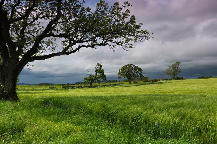 Lush field in