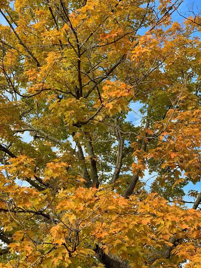 Tree Plant Full Frame Low Angle View Beauty In Nature No People Backgrounds Day Nature Growth Sunlight Branch Autumn Outdoors Sky Yellow Plant Part Leaf Scenics - Nature
