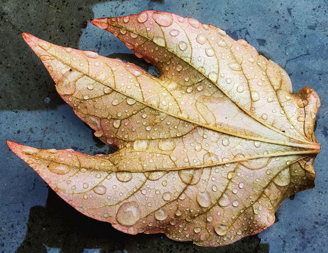 Autumn Close-up Fragility Leaf Nature No People Outdoors Rain