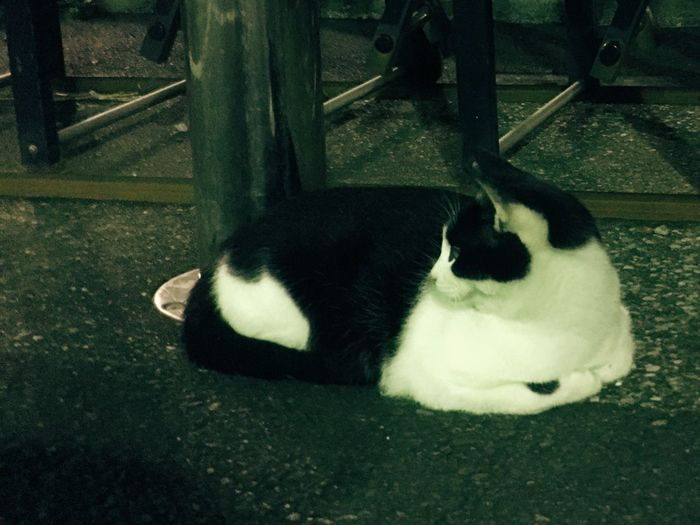 Cat Evening Barrel Sitting