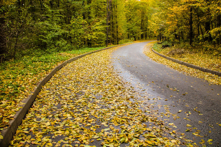 wet forest road strewn with yellow leaves Autumn Beauty In Nature Change Day Diminishing Perspective Empty Road Forest Growth Landscape Leaf Long Nature No People Outdoors Road Scenics Season  Surface Level The Way Forward Tranquil Scene Tranquility Tree Vanishing Point Wet Yellow Leaves