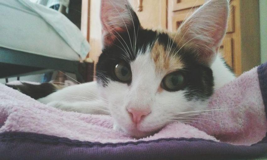 😸😻😽💕.Cat♡ Pet Kitty Cat Mygirl♥ Cute♡