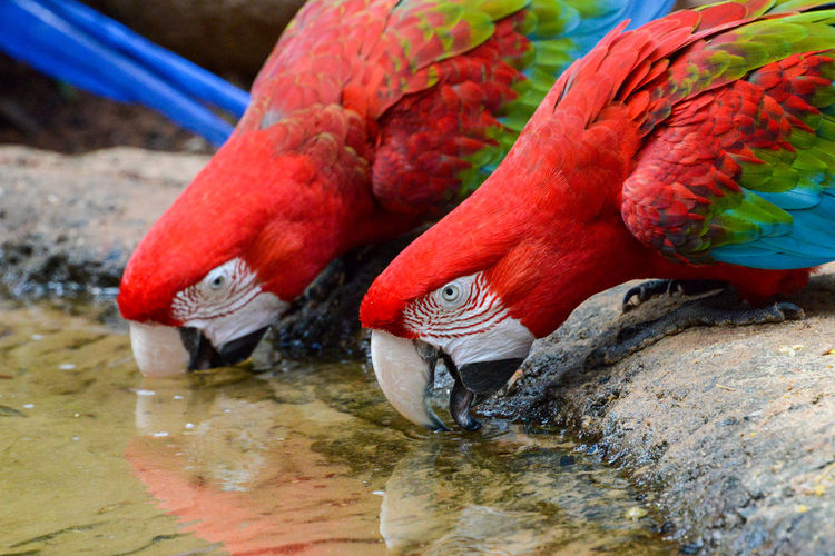 Close-up of two birds drinking water