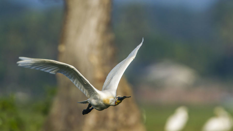 Close-up of seagull flying
