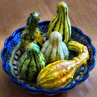 Autumn has arrived 🍂🍁🍂 Tradition Autumn colors Decorative Gourds Fruit Close-up High Angle View