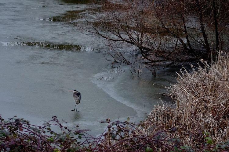 Water Bird One