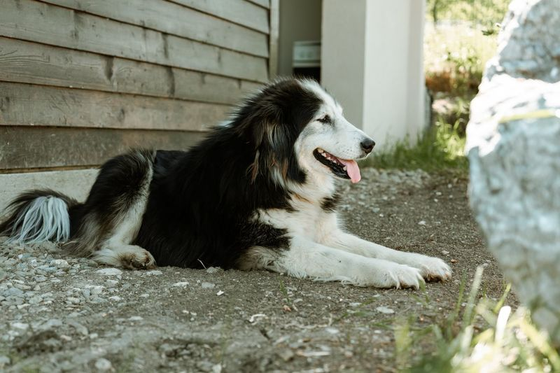 Dog looking away while sitting outdoors