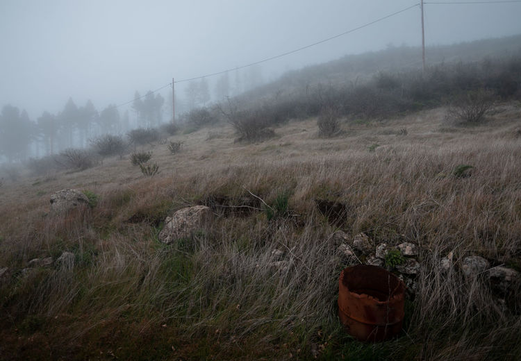 Scenic view of field during foggy weather