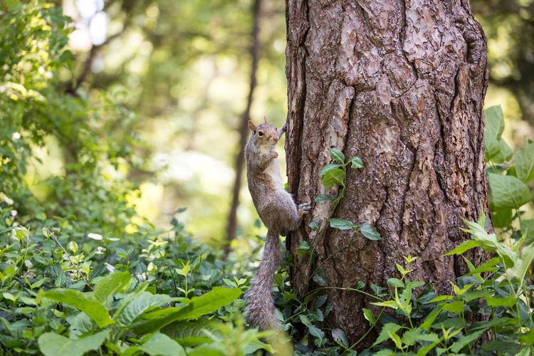 NY Nature Squirrel USA Animals Chipmunk Close Up Close-up Mammal Mammals Nature_collection Rodent Roedor Wildlife