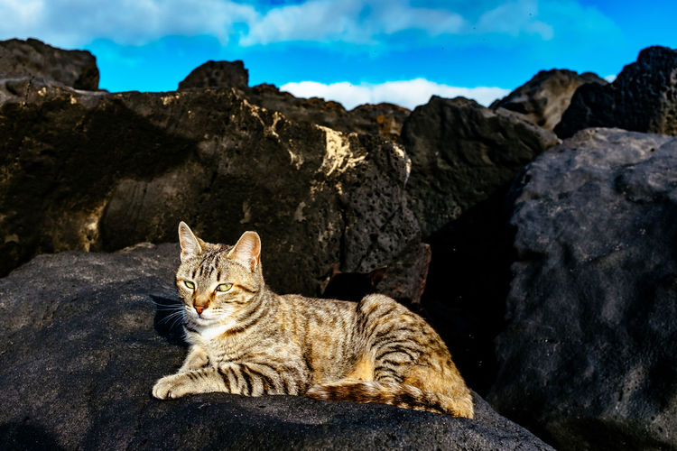 Cat Sitting On Rocks Against Blue Sky During Sunny Day