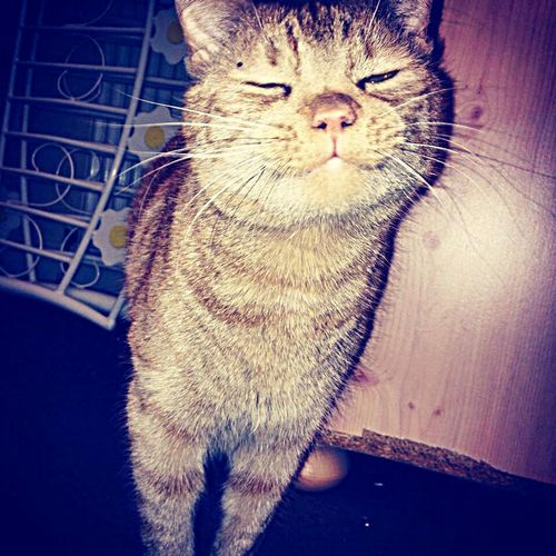 Smiles off boy cat