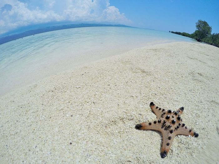 starfish by the sea Beach Photography Beauty In Nature Horizon Over Water Outdoor Photography Outdoors Photograpghy  Sand & Sea Sea And Sky Seascape Seascape Photography Starfish  Starfish At Beach Starfishes Live For The Story Sommergefühle