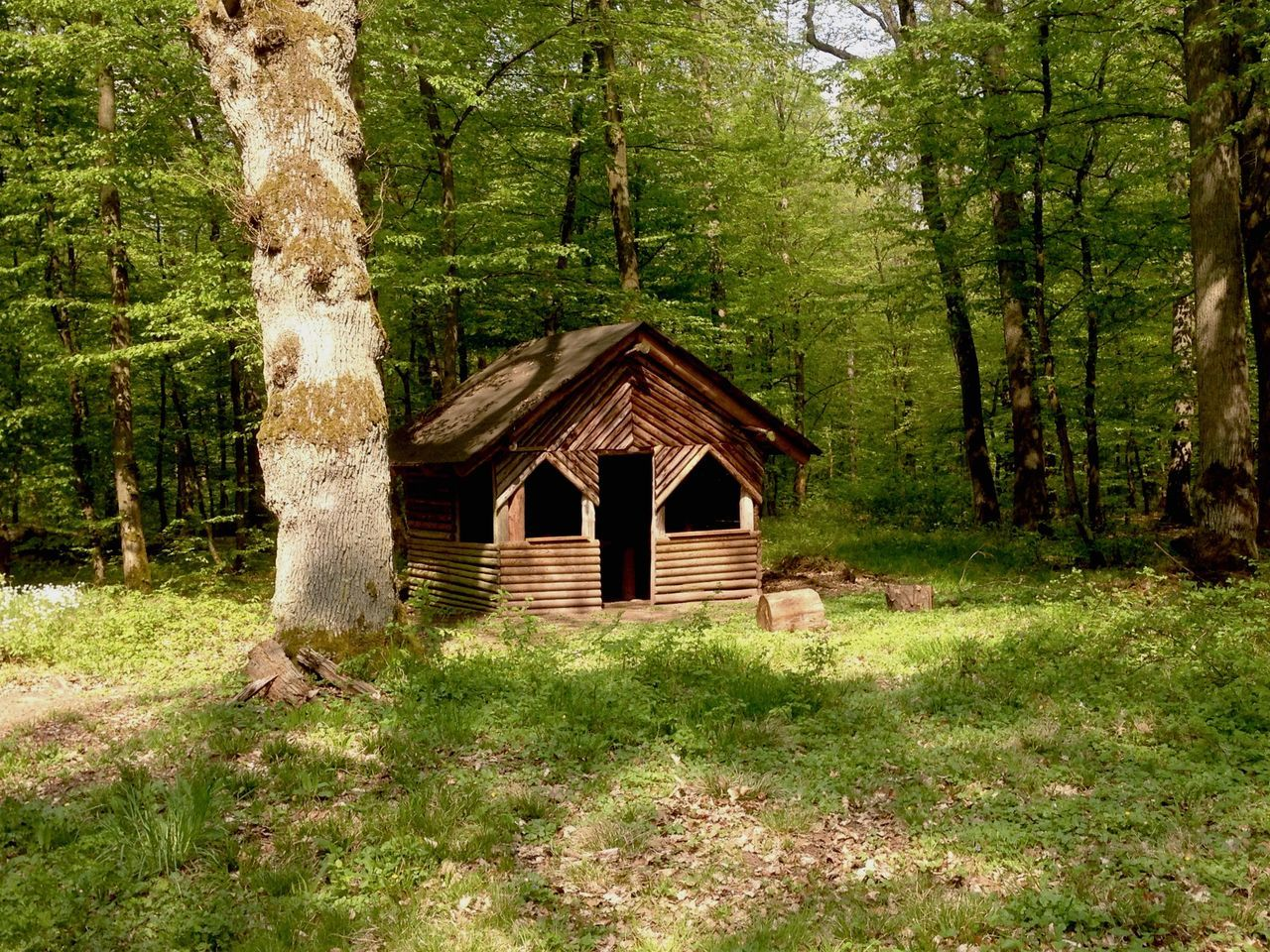 tree, plant, architecture, built structure, land, forest, tree trunk, trunk, hut, nature, grass, growth, day, no people, building exterior, green color, log cabin, landscape, wood - material, house, outdoors, woodland, cottage, cabin
