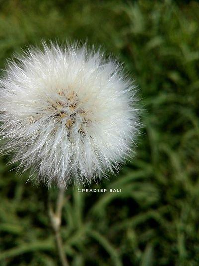 Nature Photography Photooftheday PhonePhotography Photoshoot