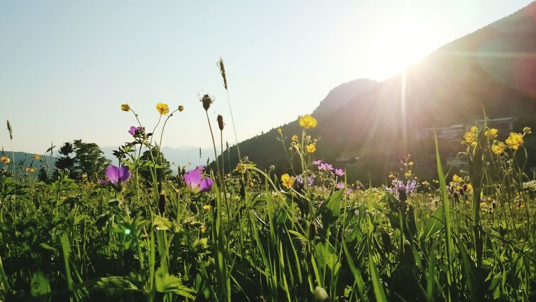 The Essence Of Summer Alpenpanorama Alpenflora Alpen Alps Alpenblumen Alpenwildblumen Alpen Sunset