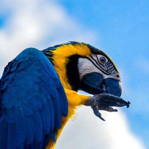 Macaw wildlife photography